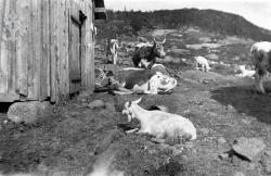 Bøsstaul i Øyfjell 03 - #KvH 06-065 b
